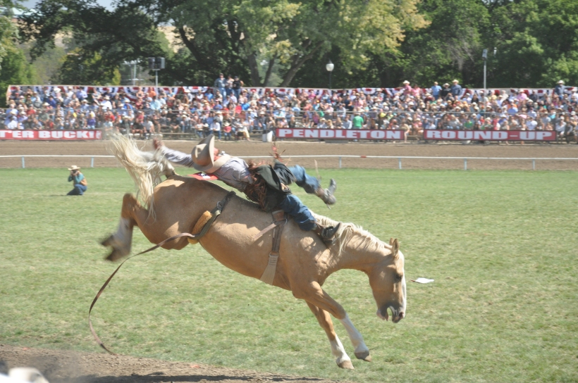 Some pairings just aren't meant to last that long. (Photo by Chintan Mehta at Pendleton Roundup 2014).